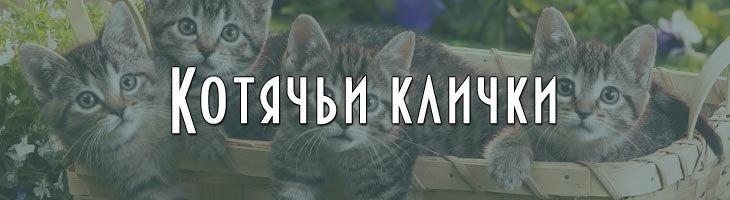 Клички для котов котят