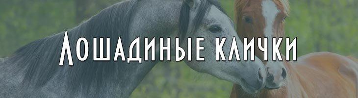 Клички коней лошадей