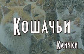 Кошачьи клички