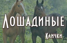 Лошадиные клички